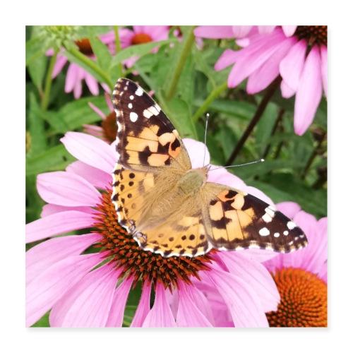 Sommerfugl med solhat - Poster 40x40 cm