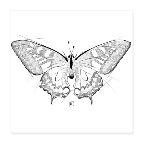 Butterfly - Poster 40x40 cm