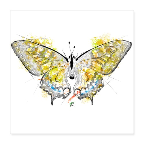 Butterfly color - Poster 40x40 cm