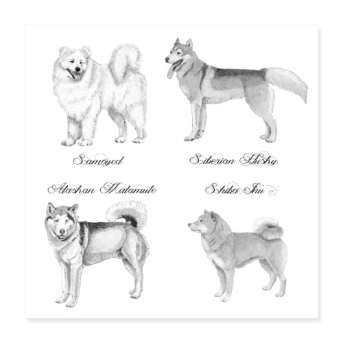 spitzdog poster - Poster 40x40 cm