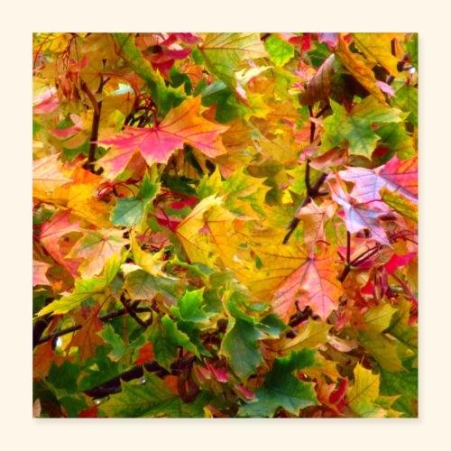 bunte Ahorn Blätter im Herbst an einem Laub Baum - Poster 40x40 cm