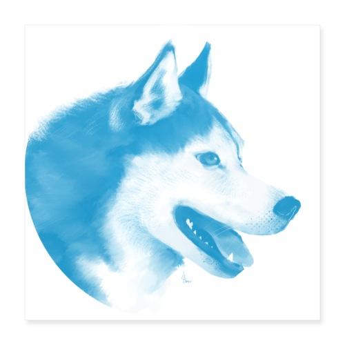 husky - 1001 nordiques - Poster 40 x 40 cm