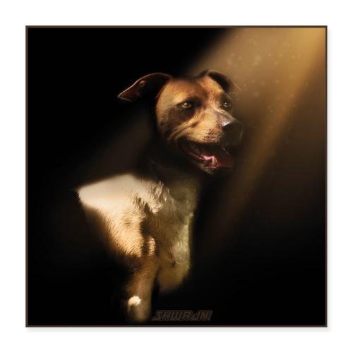 Jack, the Seeker of Light - Poster 40x40 cm