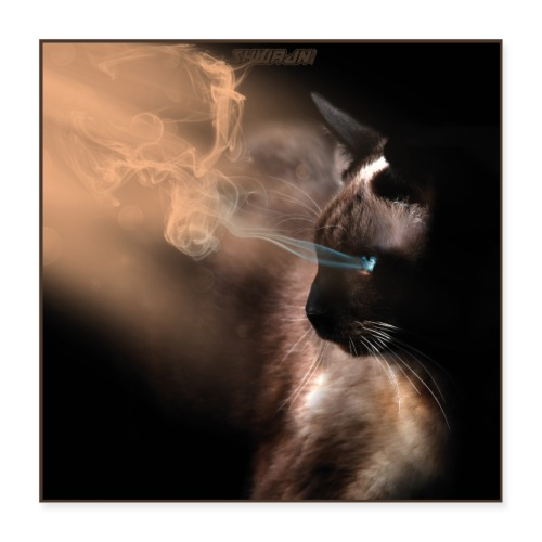 The Magical Cat - Poster 40x40 cm