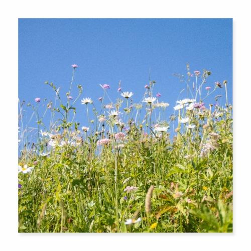 Alpage en fleurs - Poster 40 x 40 cm