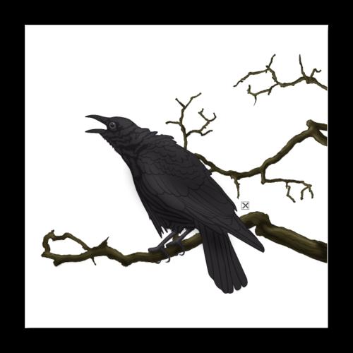 Cuervo negro - Póster 40x40 cm