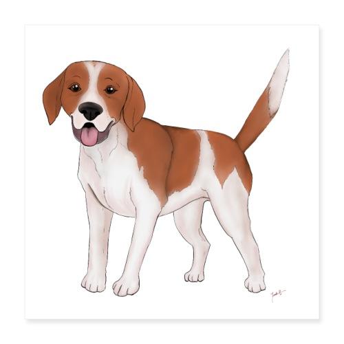 Beagle - Poster 40x40 cm