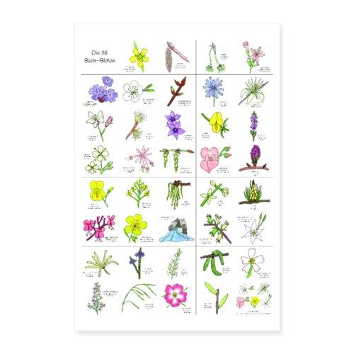 Bach-Blüten Poster - Poster 60x90 cm