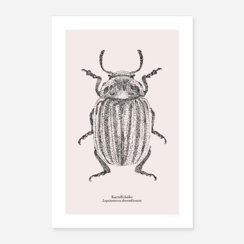 Kartoffelkäfer | Leptinotarsa decemlineata Poster - Poster 60x90 cm