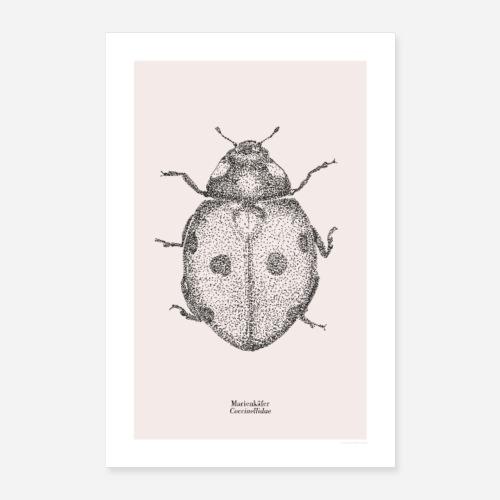 Marienkäfer | Coccinellidae Poster - Poster 60x90 cm