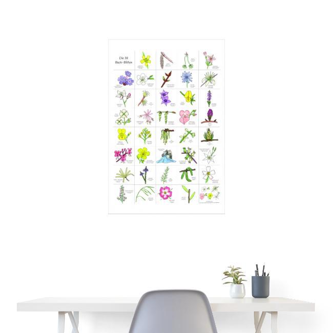 Bach-Blüten Poster handgezeichnet