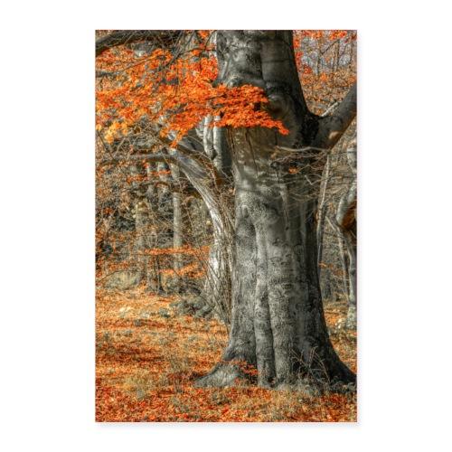 Farbenfroher Herbstwald alte Bäume - Poster 60x90 cm