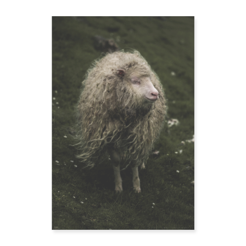The Hippie Sheep from the Faroe Islands - Poster 60x90 cm