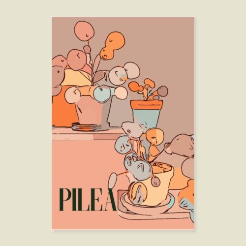 Cool pilea - Poster 60x90 cm