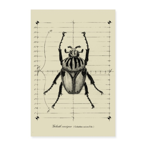 Poster scarabée goliathus - Poster 60 x 90 cm