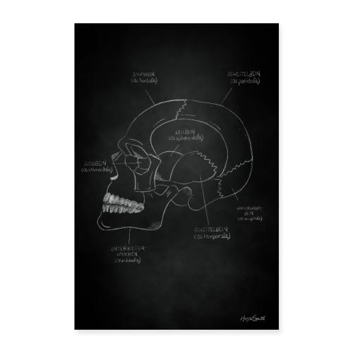 Anatomieposter Kreidezeichnung Schädelknochen - Poster 60x90 cm
