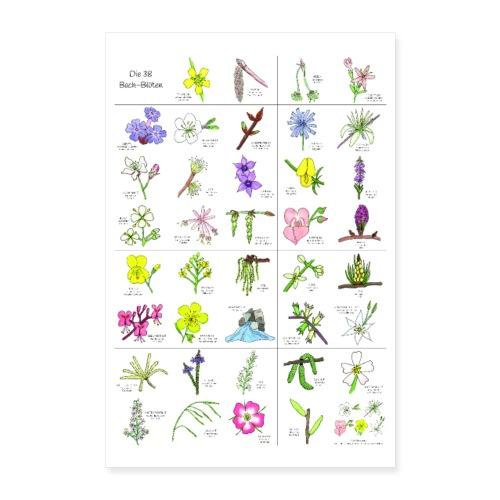 Bach-Blüten Poster - Poster 40x60 cm