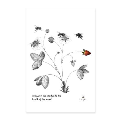 Pollinators - Póster 40x60 cm