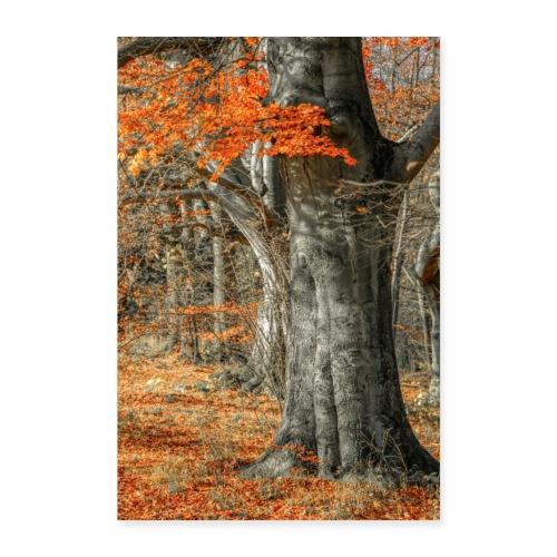 Farbenfroher Herbstwald alte Bäume - Poster 40x60 cm