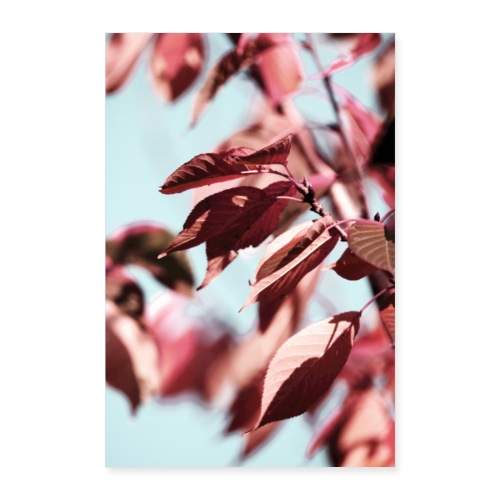 Leaves - Poster 40x60 cm