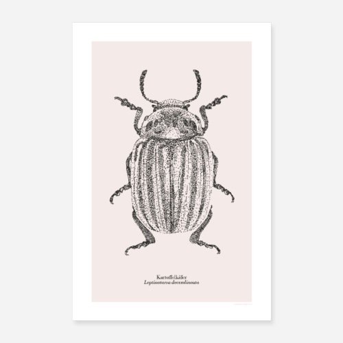 Kartoffelkäfer | Leptinotarsa decemlineata Poster - Poster 40x60 cm