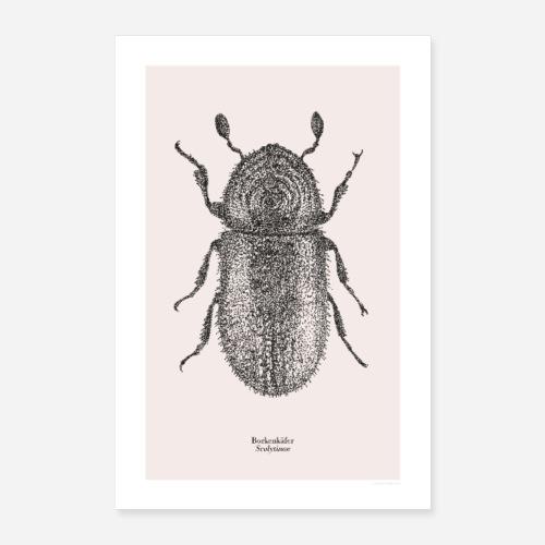 Borkenkäfer | Scolytinae Poster - Poster 40x60 cm