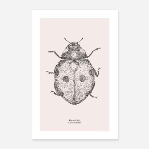 Marienkäfer | Coccinellidae Poster - Poster 40x60 cm