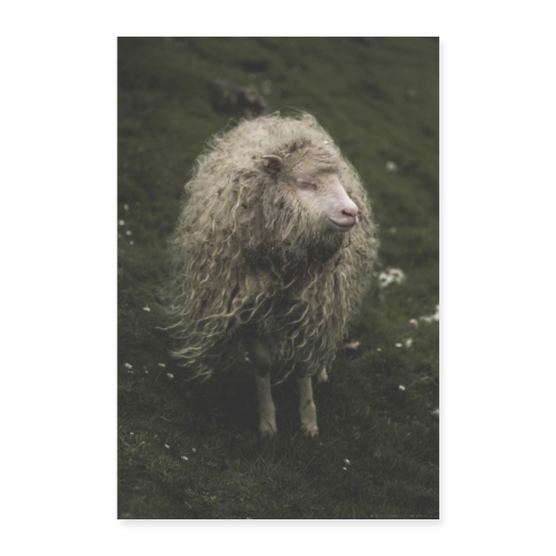 The Hippie Sheep from the Faroe Islands - Poster 40x60 cm