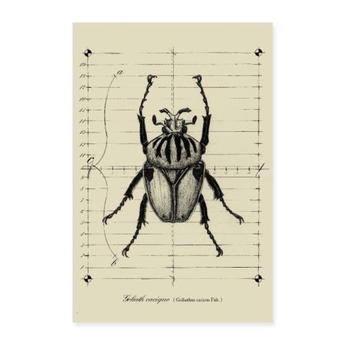 Poster scarabée goliathus - Poster 40 x 60 cm