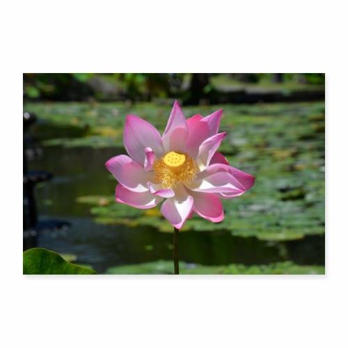 Lotusblüte im Tempel - Poster 90x60 cm