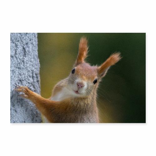 Eichhörnchen - Poster 90x60 cm