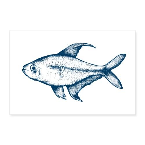 Fisch Poster - Poster 90x60 cm