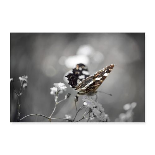 Verträumter Schmetterling - Poster 90x60 cm