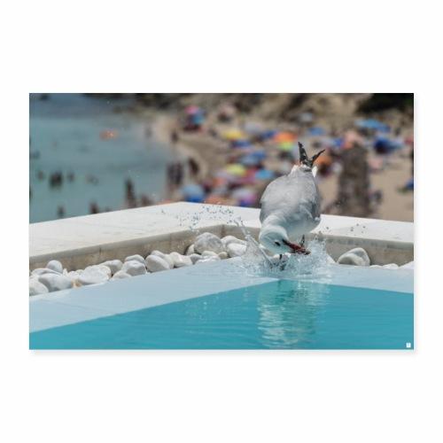 Möwe im Pool - Poster 90x60 cm