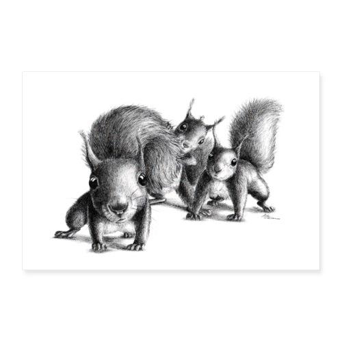 Drei neugierige Eichhoernchen - Poster 90x60 cm