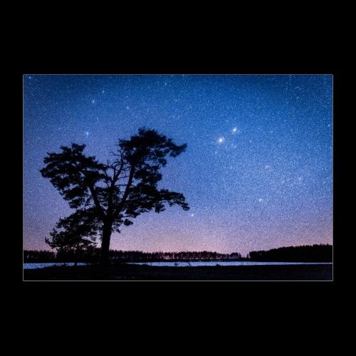 Puu tähtitaivaan alla - Juliste 90x60 cm
