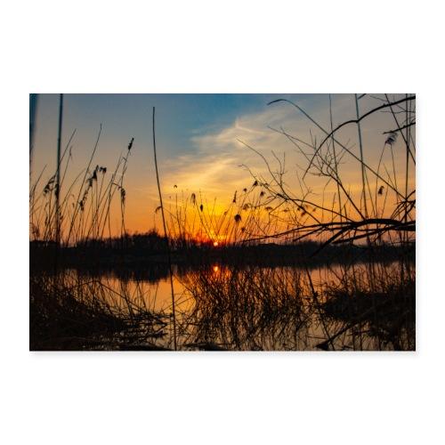 Sonnenuntergang hinter dem Schilf - Poster 90x60 cm