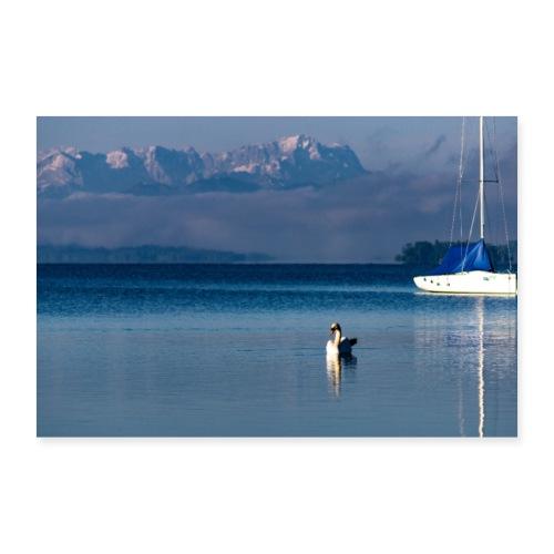 Schwan auf dem Starnberger See - Poster 90x60 cm