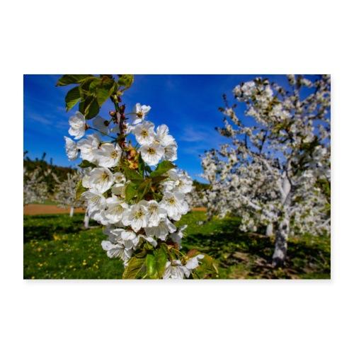 Kirschblüten im Fokus - Poster 90x60 cm