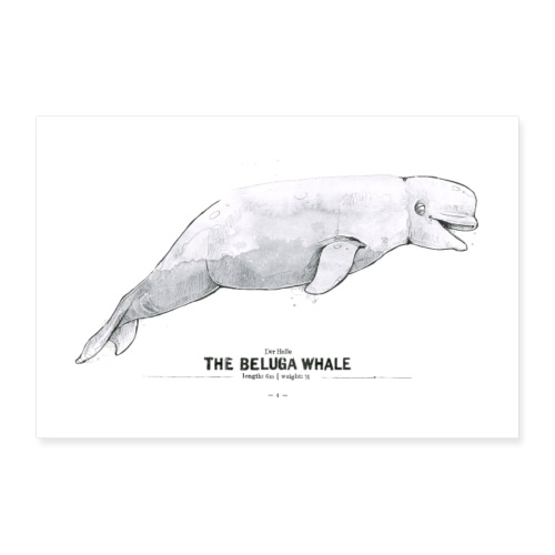 Weißwal (The Beluga Whale) - Poster 90x60 cm