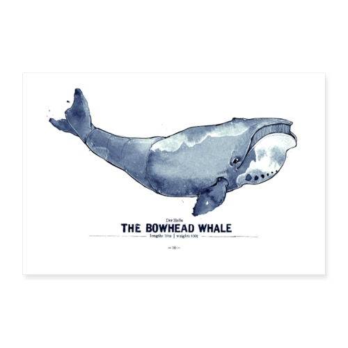 Grönlandwal (The Bowhead Whale) - Poster 90x60 cm