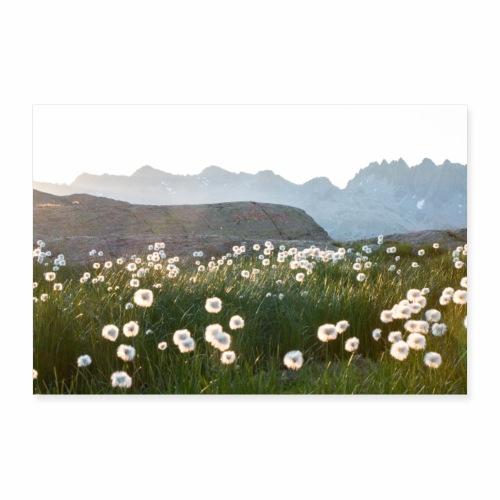 Coucher du soleil sur des linaigrettes - Poster 90 x 60 cm