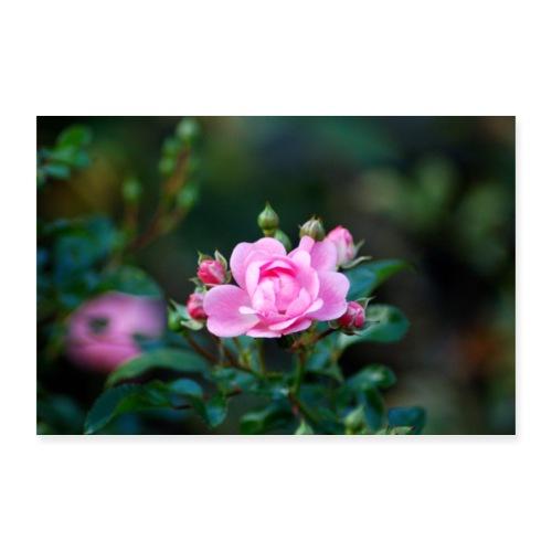 Rose - Poster 90x60 cm