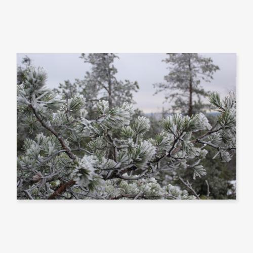 frost - Juliste 90x60 cm
