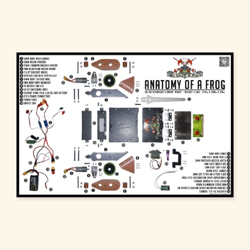 Anatomy of a Frog - Poster 36 x 24 (90x60 cm)