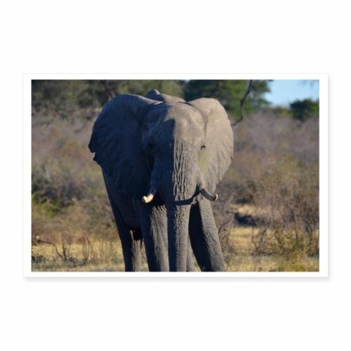 Elefant Abendsonne - Poster 90x60 cm