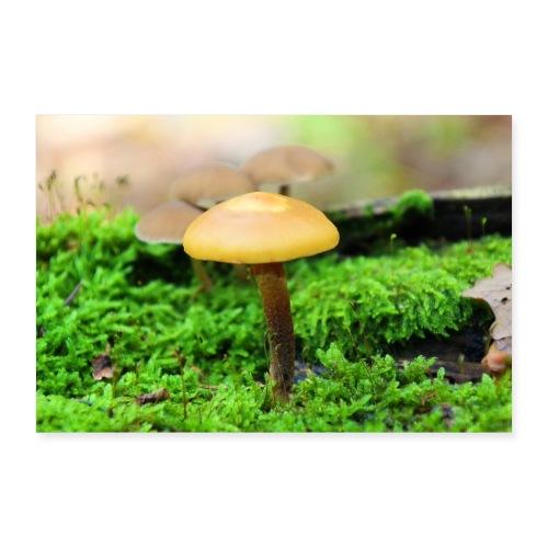 kleiner Pilz - Poster 90x60 cm