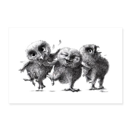 Drei lustige freche Eulen - Poster 30x20 cm
