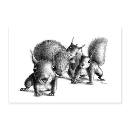 Drei neugierige Eichhoernchen - Poster 30x20 cm