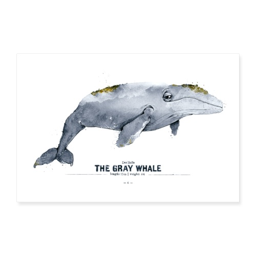 Grauwal (The Gray Whale) - Poster 30x20 cm